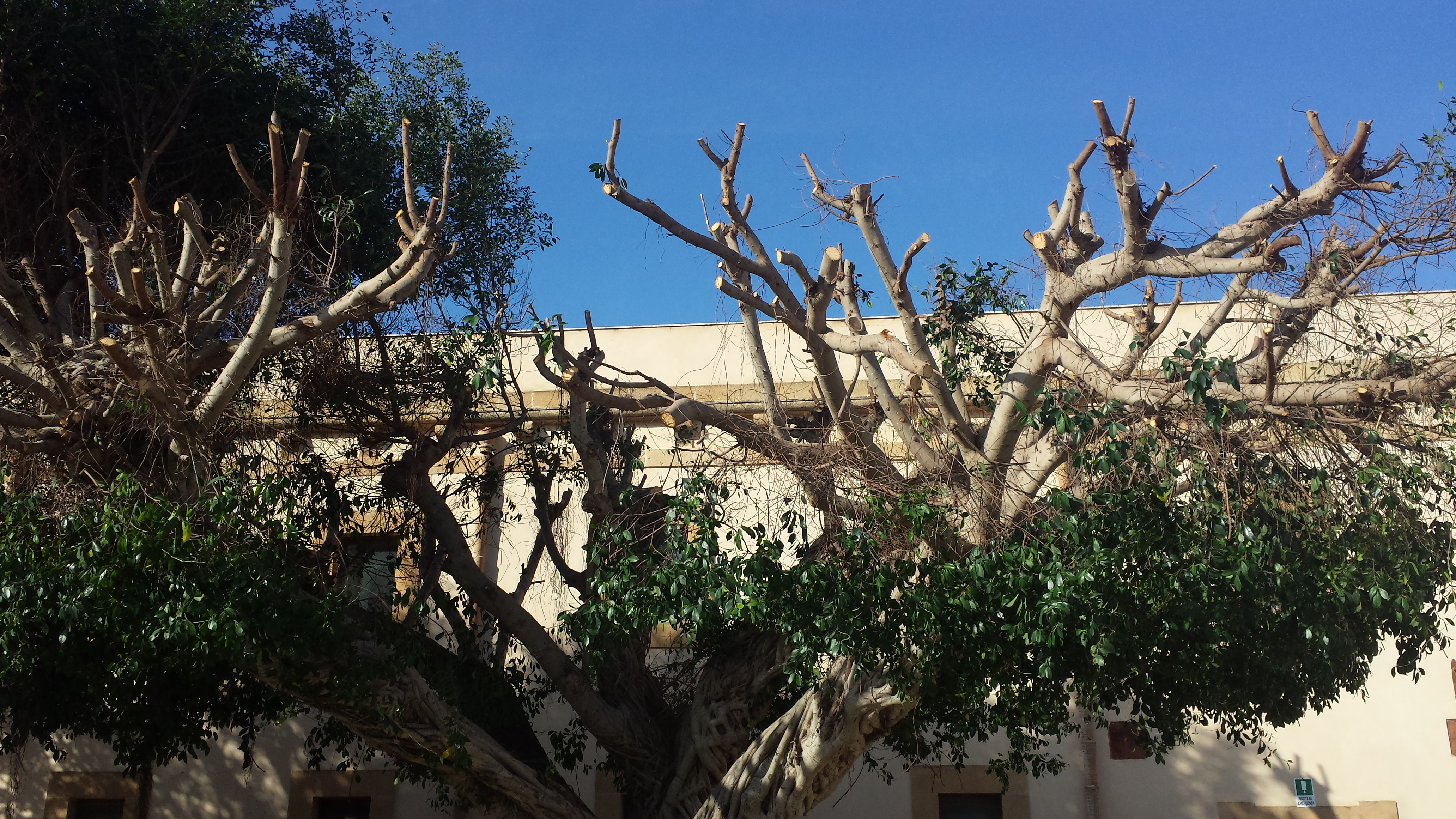 alberi potati marsala