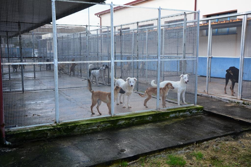 mazara sul sito del comune le foto e le schede dei cani