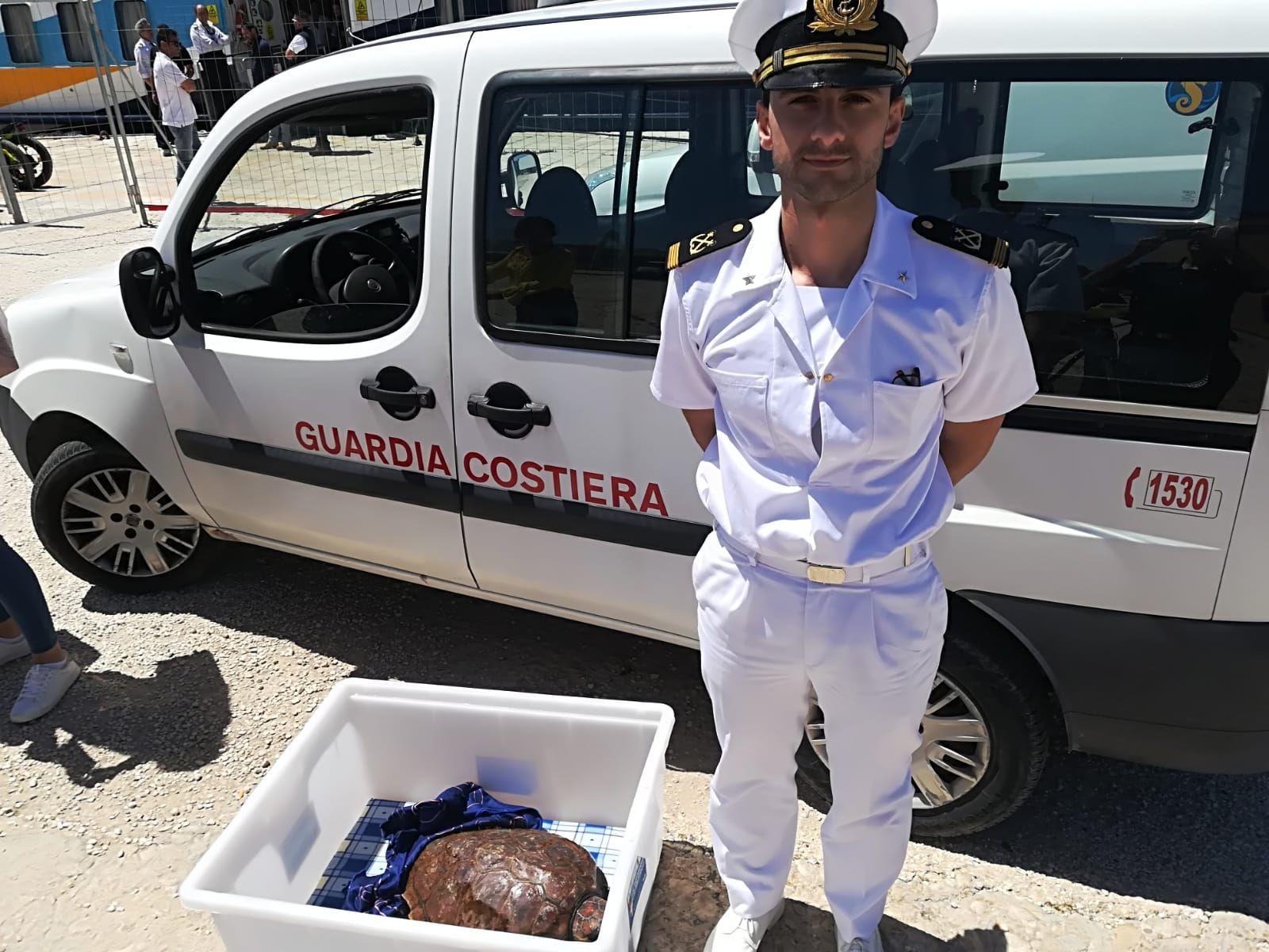 recupero tartaruga Caretta Caretta